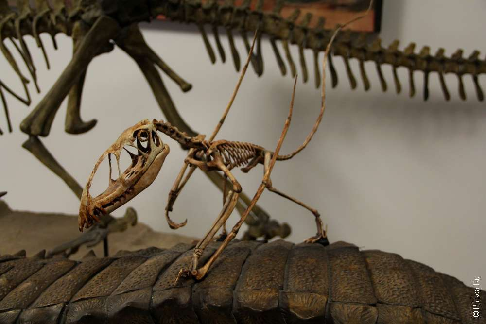 Скелеты динозавров в музее парка Окаменевший лес (Петрифайд Форест), Аризона, США