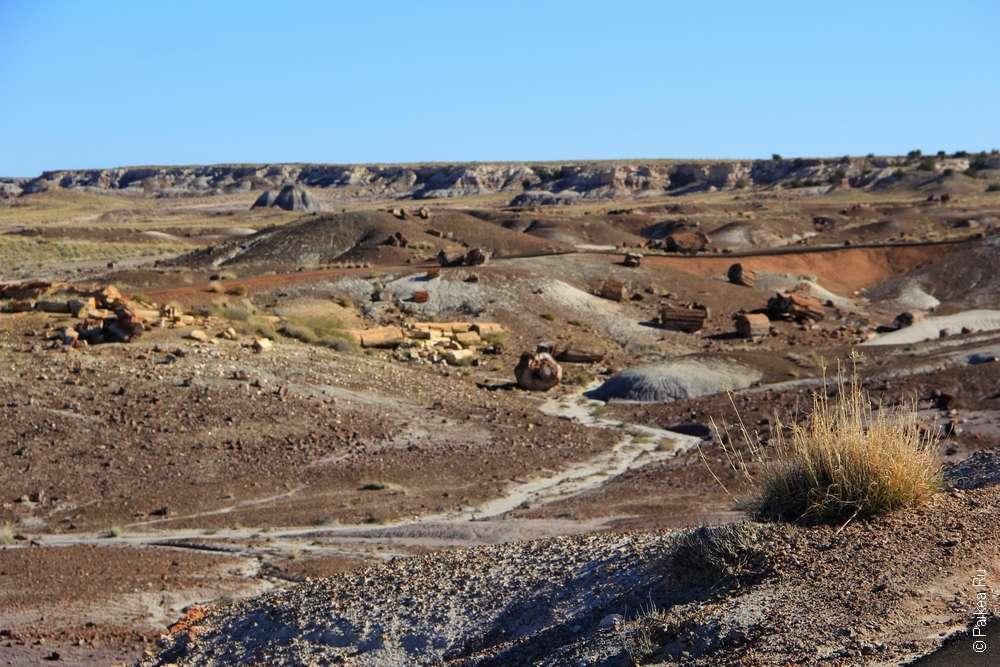 Окаменевший лес (Петрифайд Форест), Аризона, США
