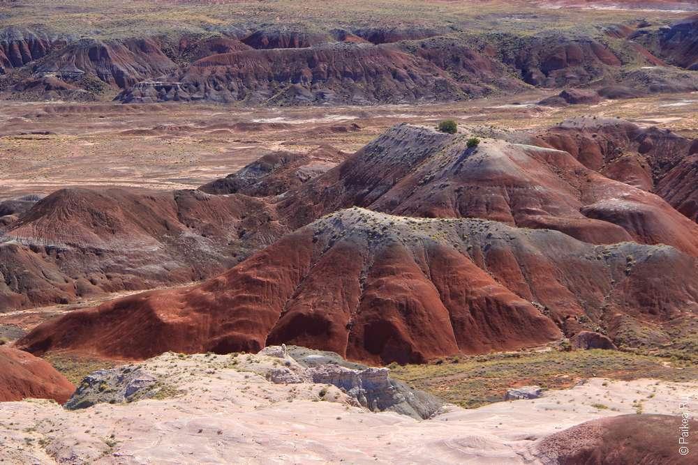 Цветная пустыня в нацпарке Петрифайд Форест, Аризона, США