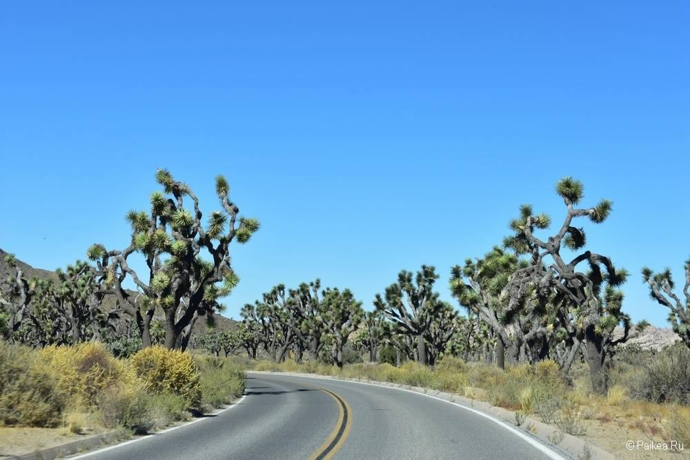 Как добраться в национальный парк Джошуа Три