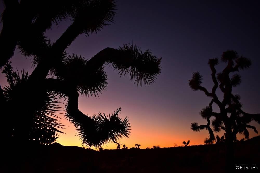 Рассвет в парке Джошуа Три, Калифорния, США