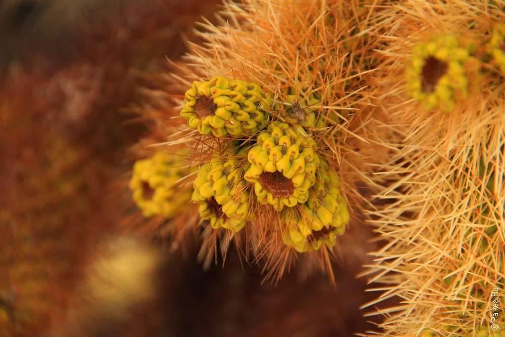 Растения в парке Джошуа Три, Калифорния, США