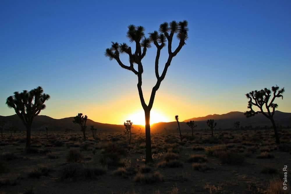 Национальный парк Джошуа Три, Калифорния, США