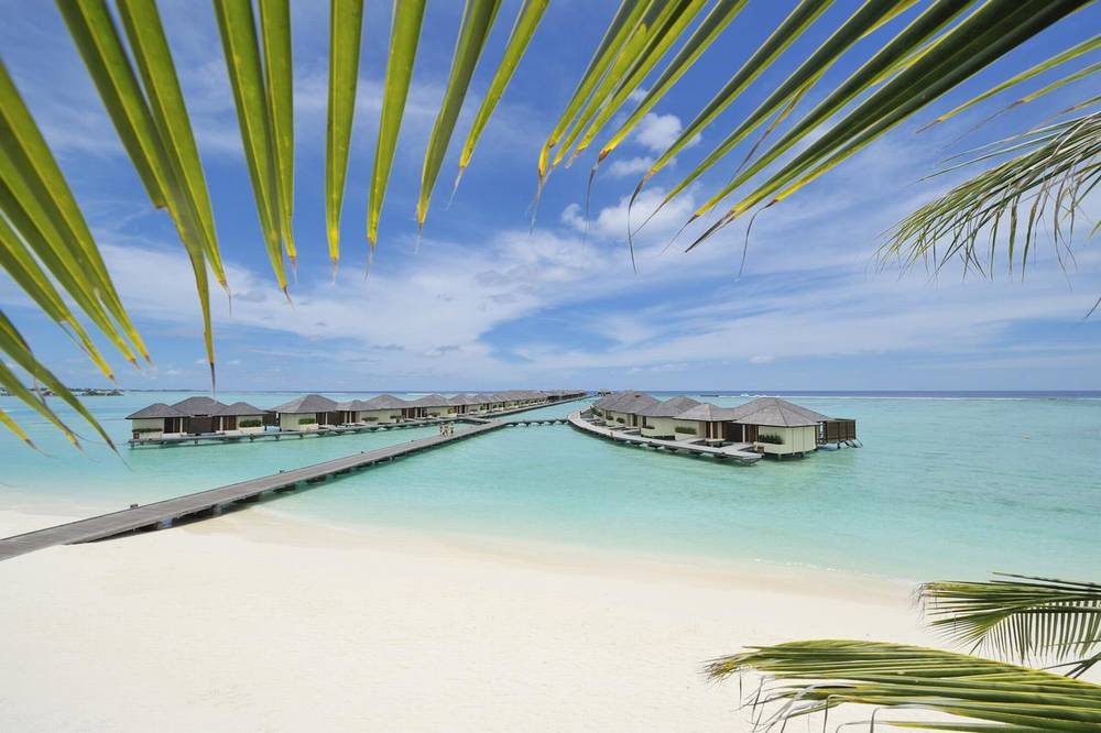Мальдивы отель с домашним рифом paradise island
