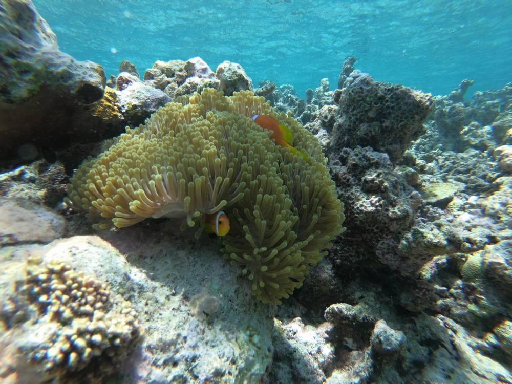 домашний риф на мальдивах