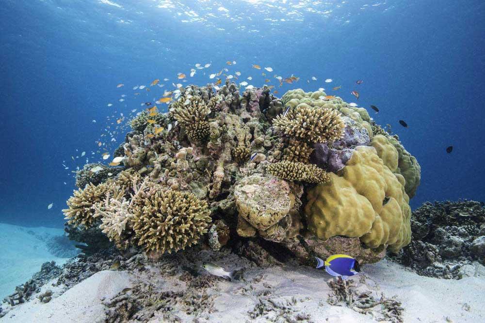 мальдивы снорклинг на домашнем рифе