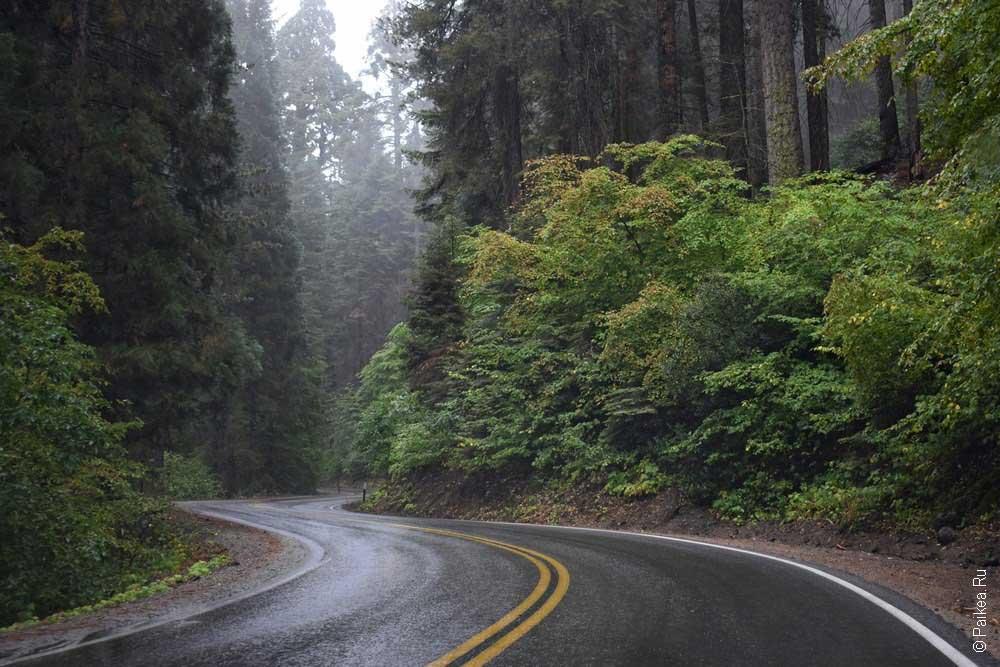 шоссе в парке секвойя