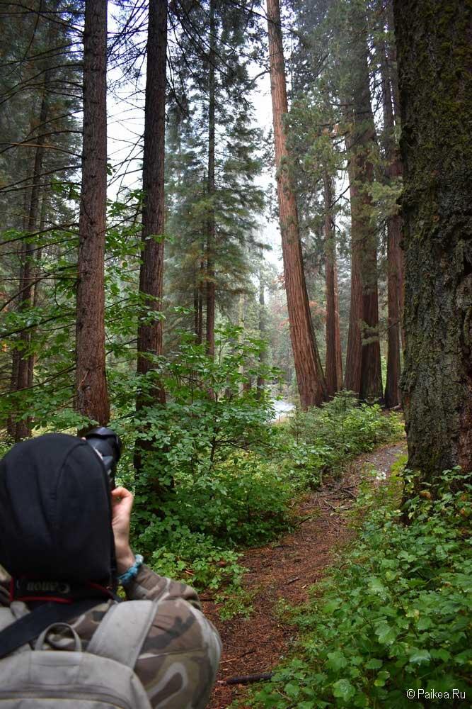 фото в парке секвойя, калифорния, сша