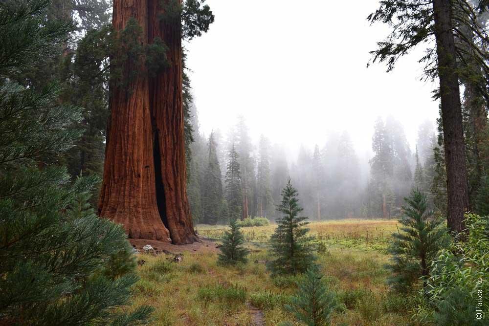 осень в парке секвойя, калифорния, сша