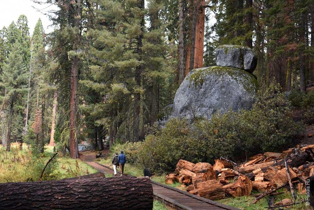big trees trail в парке секвойя, калифорния, сша