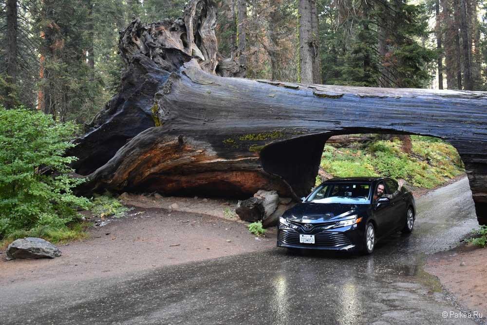 национальный парк секвойя калифорния