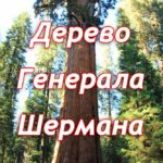 Дерево Генерала Шермана (General Sherman Tree)