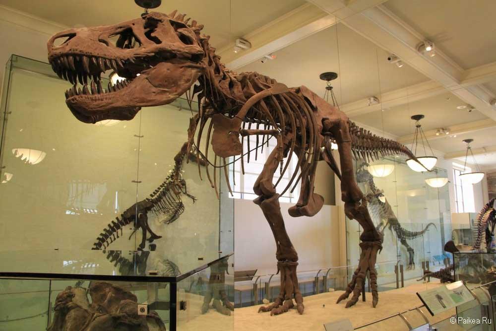 Достопримечательности Нью-Йорка динозавры