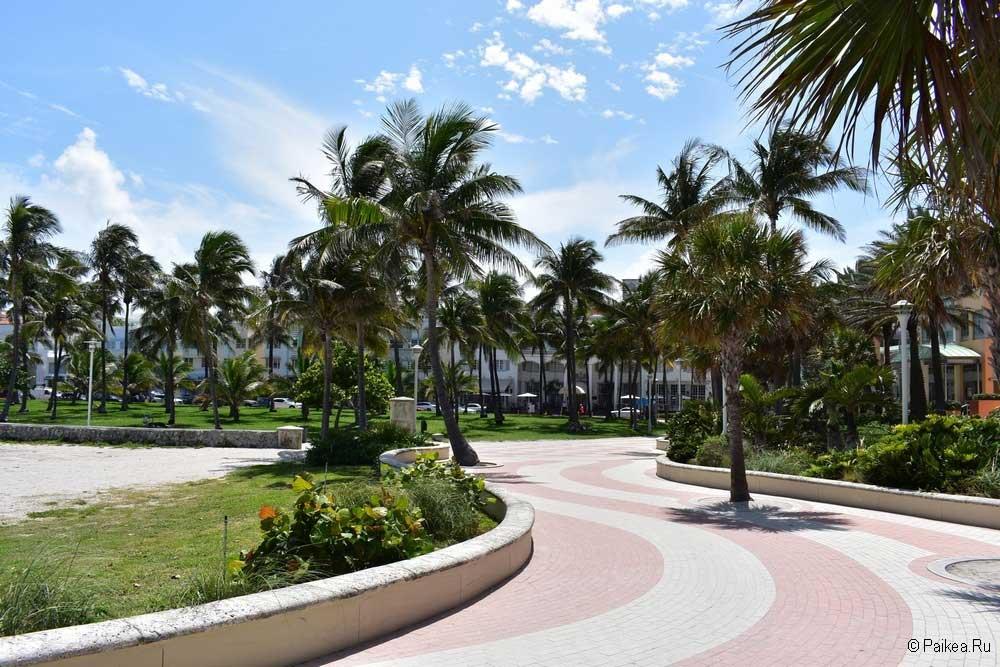 Майами пальмы