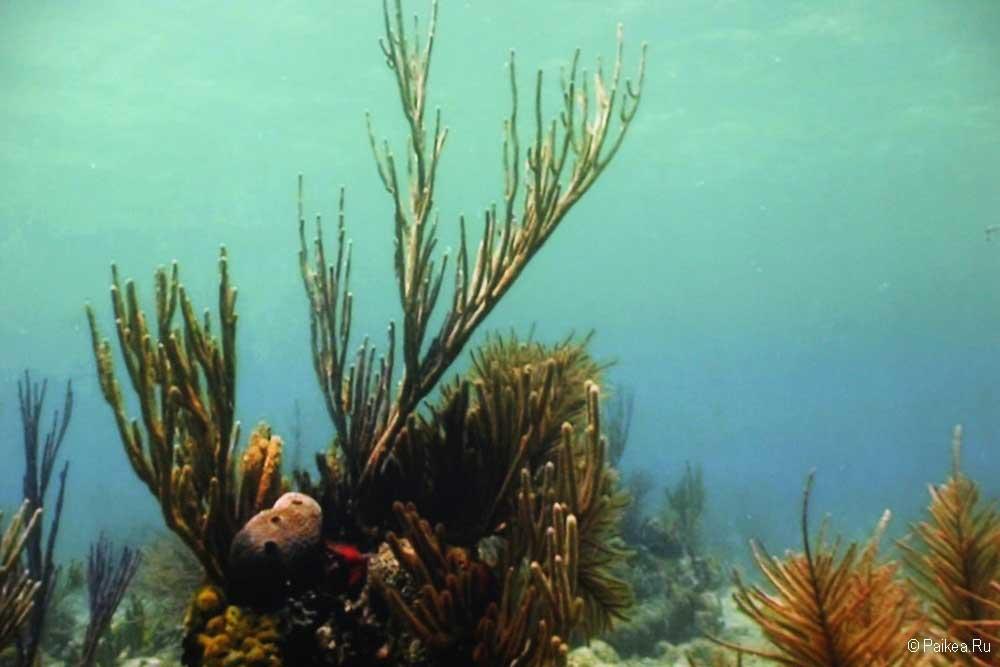 Подводная жизнь залива Бискейн
