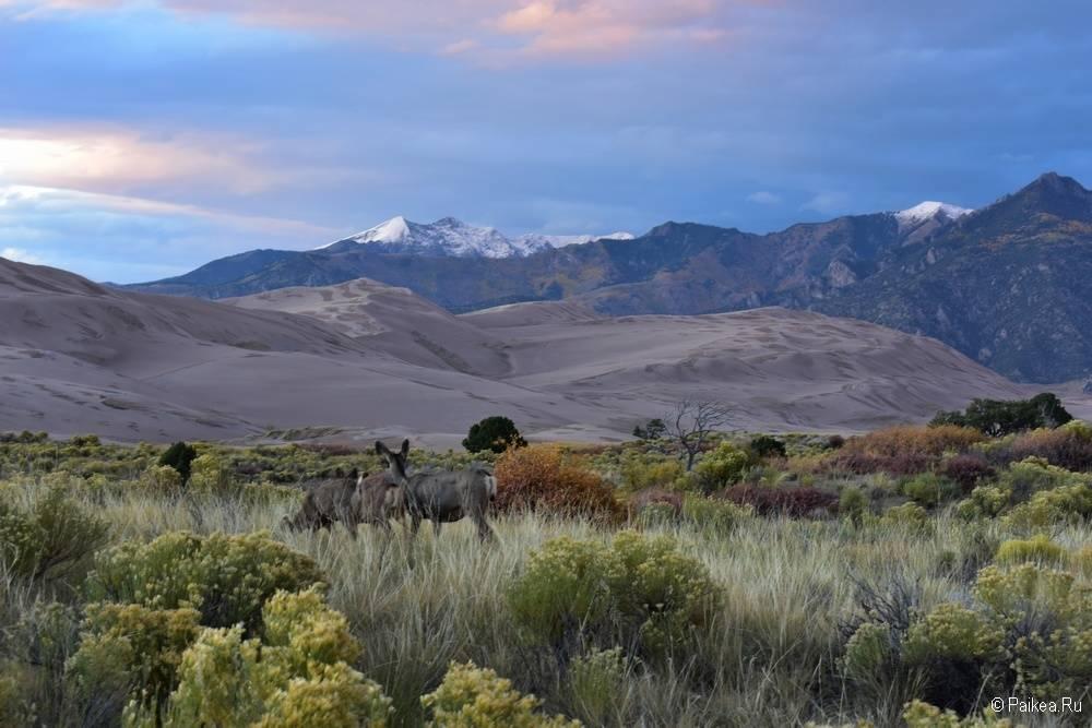 Национальный парк Грейт Сэндс Дьюнс Колорадо США