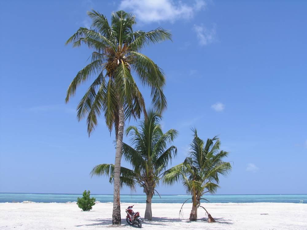 Отдых в гестхаусе на Мальдивах 28