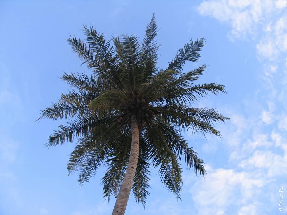 Отдых в гестхаусе на Мальдивах 36