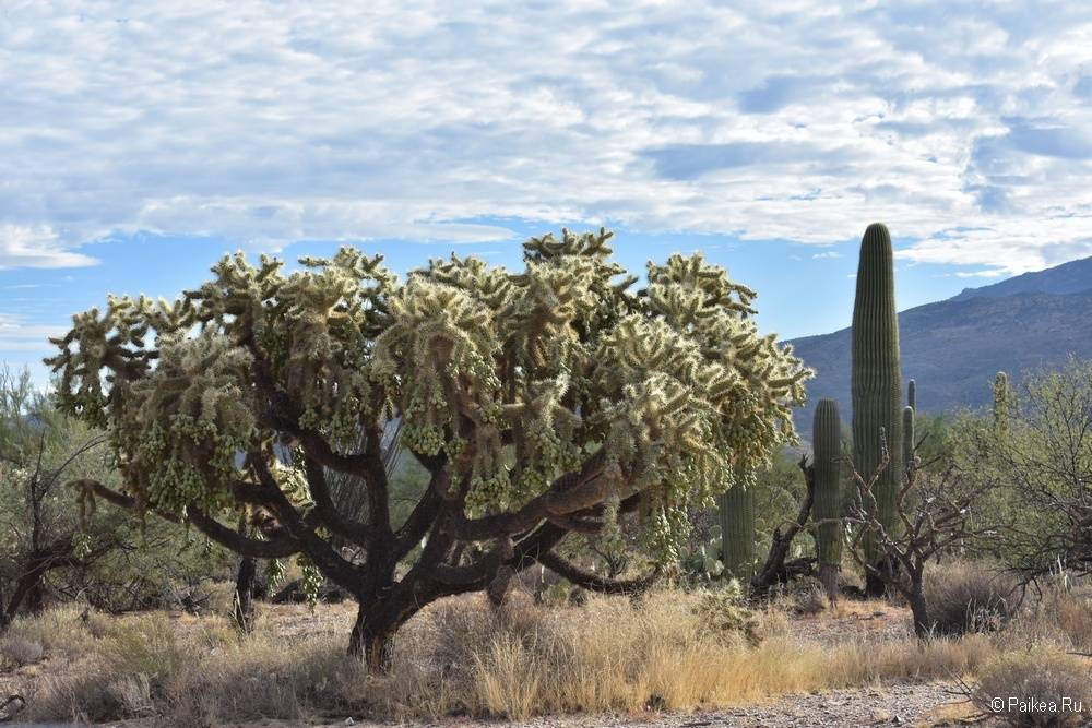 Сагуаро парк (Saguaro National Park) 17