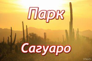 Парк Сагуаро (Saguaro National Park)
