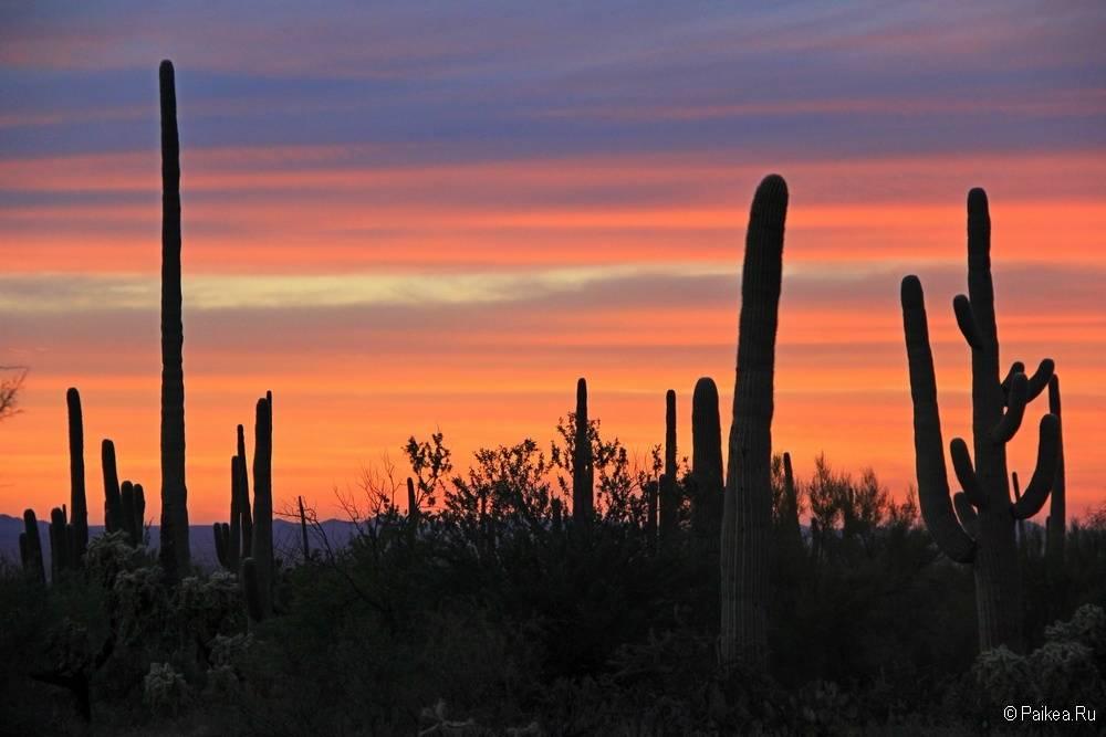 Сагуаро парк (Saguaro National Park) 31