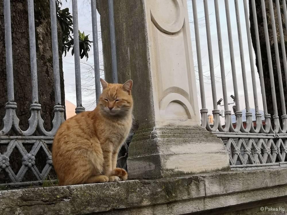 Кот в Стамбуле