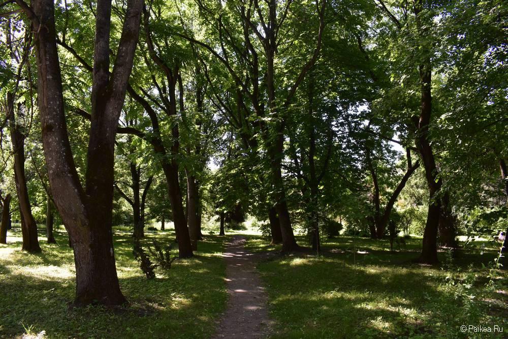 Деревья, Витебский Ботанический сад