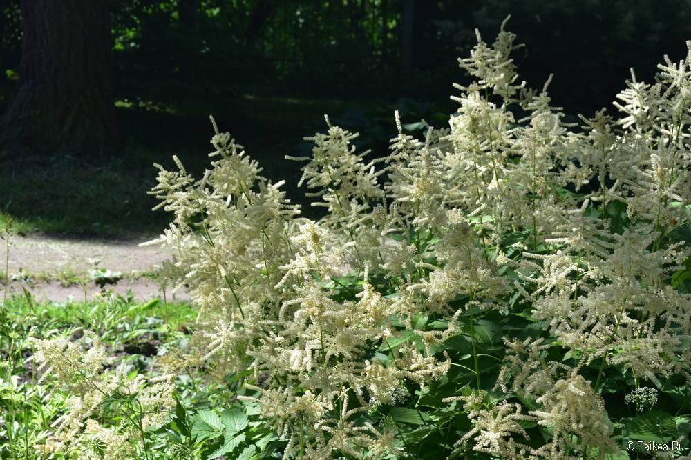 Витебский Ботанический сад фото