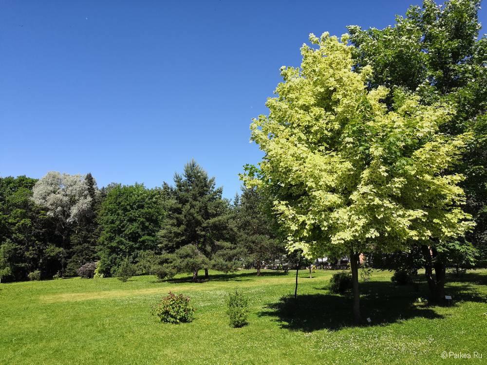 Ботанический сад, Витебск
