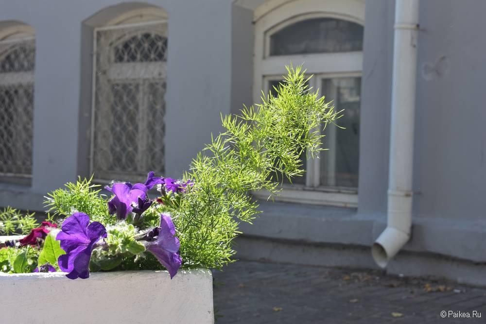 Цветы на улицах Витебска