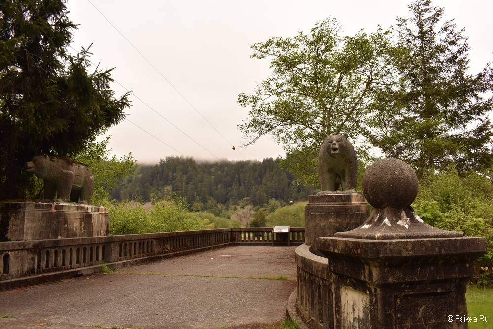 северная калифорния мост с медведями