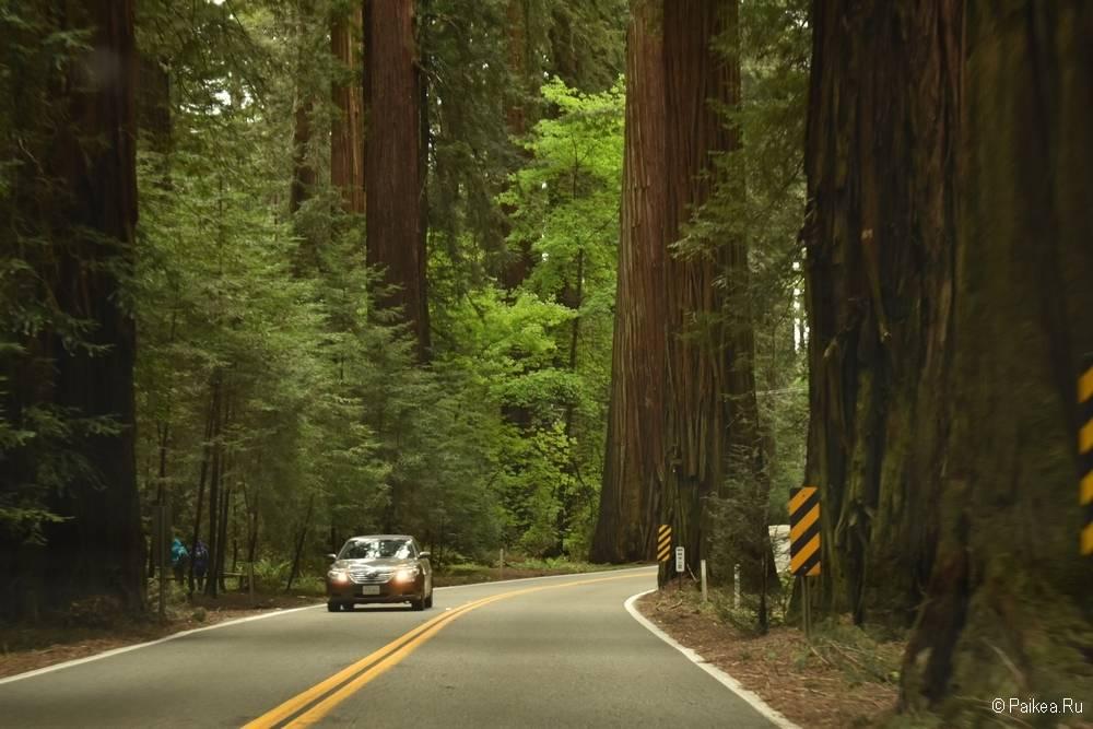 маршрут по северной калифорнии день 9