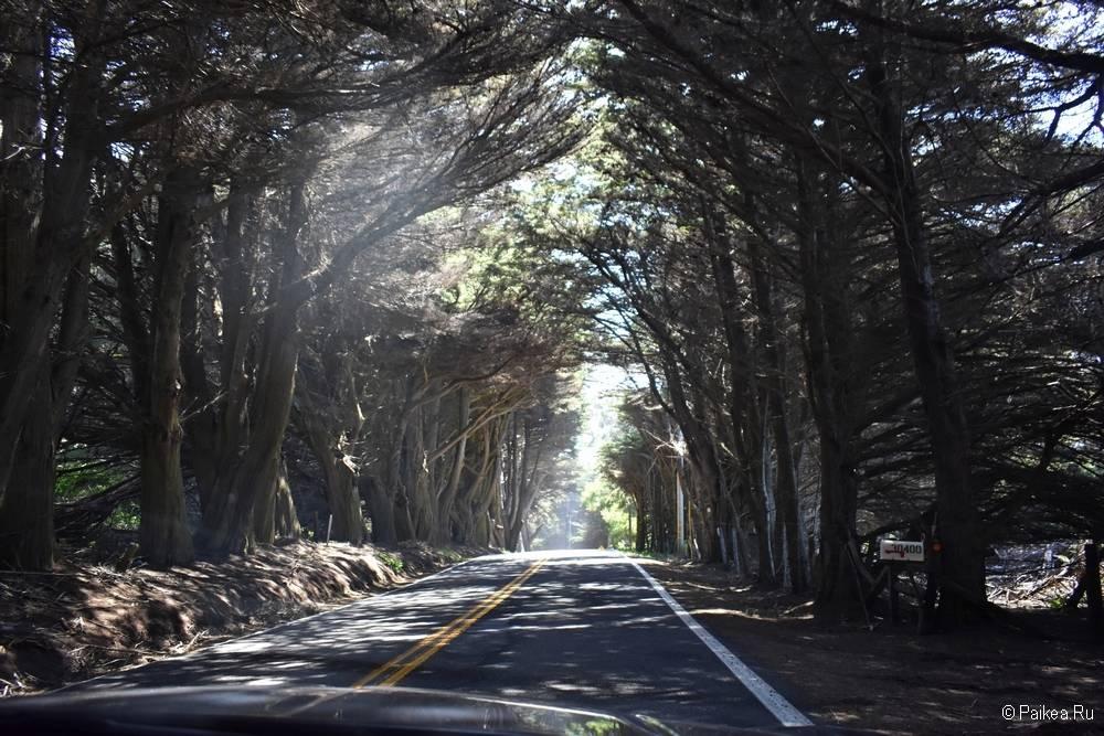 северная калифорния маршрут из сан-франциско 46